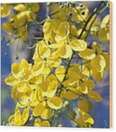 Golden Shower Tree - Cassia Fistula - Kula Maui Hawaii Wood Print
