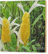 Golden Shrimp Plant Or Lollipop Plant Wood Print