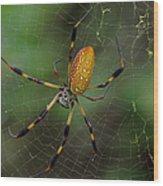 Golden Silk Spider 10 Wood Print