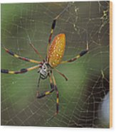 Golden Silk Spider 9  Wood Print