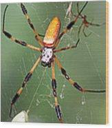 Golden Silk Spider Capturing A Stinkbug Wood Print