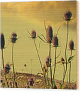 Teasels Reach For The Golden Sky Wood Print