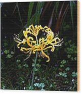 Golden Spider Lily Wood Print