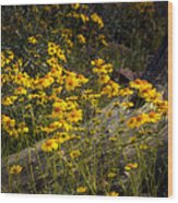 Golden Spring Flowers  Wood Print