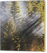 Golden Sunbeams Wood Print