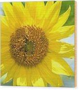 Golden Sunflower - 2013 Wood Print