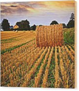 Golden Sunset Over Farm Field In Ontario Wood Print