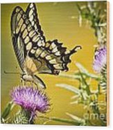 Golden Swallowtail Wood Print