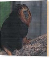Golden Tamarin Wood Print