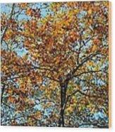 Golden Tree Lined Sky Wood Print