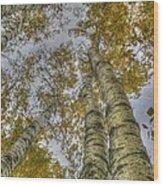 Golden Trees Summer Wood Print