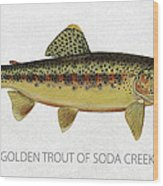 Golden Trout Of Soda Creek Wood Print by Aged Pixel