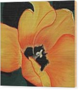 Golden Tulip Wood Print