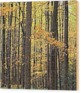 Golden View Wood Print