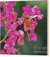 Golden Visitor Wood Print