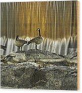 Golden Waterfalls Wood Print