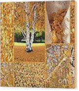 Golden Weeping Birch Tree Collage Wood Print
