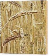 Golden Wheat  Wood Print
