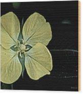 Golden Wild Beauty Wood Print