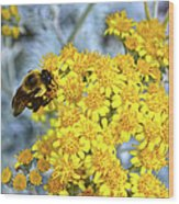 Golden Yarrow And Visitor Wood Print