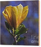 Golden Yellow Magnolia Blossom Wood Print