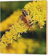 Goldenrod Beetle Wood Print