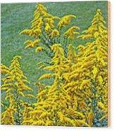 Goldenrod Flowers Wood Print
