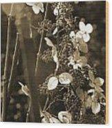 Goldenrod In Sepia Wood Print