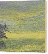 Goldenrod Oak Santa Ynez California 3 Wood Print