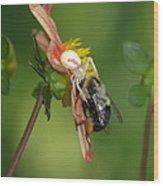 Goldenrod Spider Wood Print