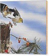 Goldfiches Flying Over Lichen Stump Wood Print
