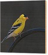 Goldfinch 3 Wood Print