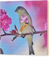 Goldfinch Behind Pink Blossoms 031015aaa Wood Print