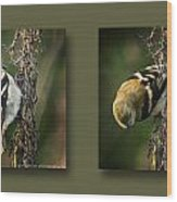 Goldfinch Collage Wood Print