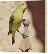 Goldfinch Contemplating 031015ac Wood Print