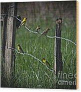 Goldfinch Gathering Wood Print