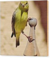 Goldfinch Hanging On 031015ac Wood Print