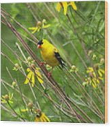Goldfinch In The Flowers Wood Print