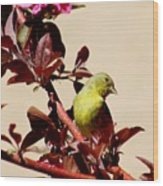 Goldfinch In Tree 031015a Wood Print