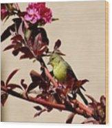 Goldfinch In Tree 031015aa Wood Print