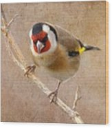 Goldfinch Male Carduelis Carduelis Wood Print