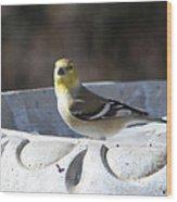 Goldfinch On Bird Bath Wood Print
