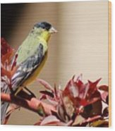 Goldfinch On Branch 031015aab Wood Print