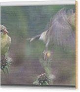 Goldfinch On Echinacia Wood Print