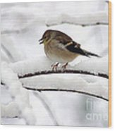 Goldfinch On Snowy Branches Wood Print