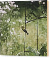 Goldfinch On The Lookout -19 Wood Print