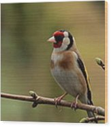 Goldfinch Wood Print by Peter Skelton