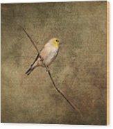 Goldfinch Portrait Wood Print