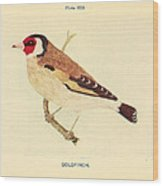 Goldfinch Wood Print by Philip Ralley