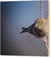 Goldfinch Visit Wood Print